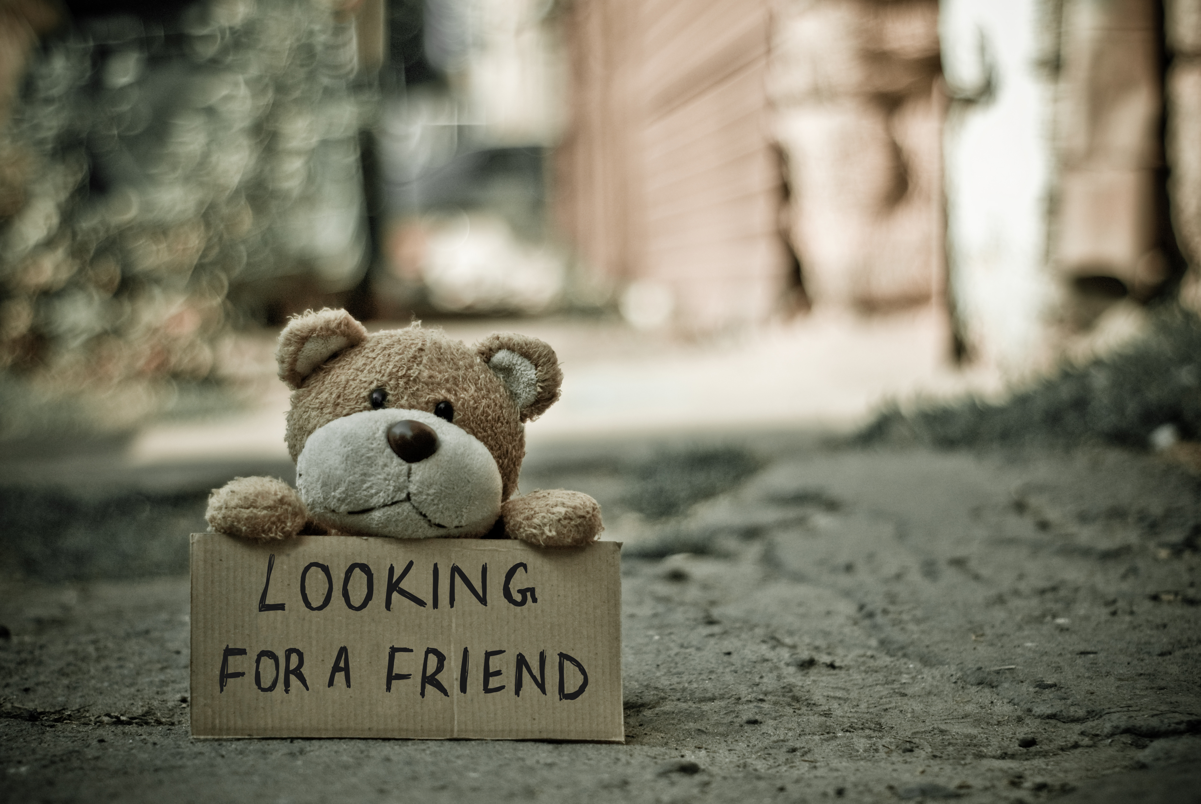 "A teddy bear sits on a sidewalk with a sign that says ""Looking for a friend"""